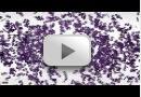 The Molecular Basis of Alzheimer's Disease - Prof. Patrick C. Fraering
